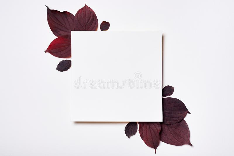 Autumn composition. Frame made of blank paper and leaves on white background. Fall concept. Autumn thanksgiving texture. Flat lay. Top view, copy space, leaf stock images