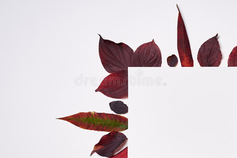 Autumn composition. Frame made of blank paper and leaves on white background. Fall concept. Autumn thanksgiving texture. Flat lay. Autumn composition. Frame royalty free illustration