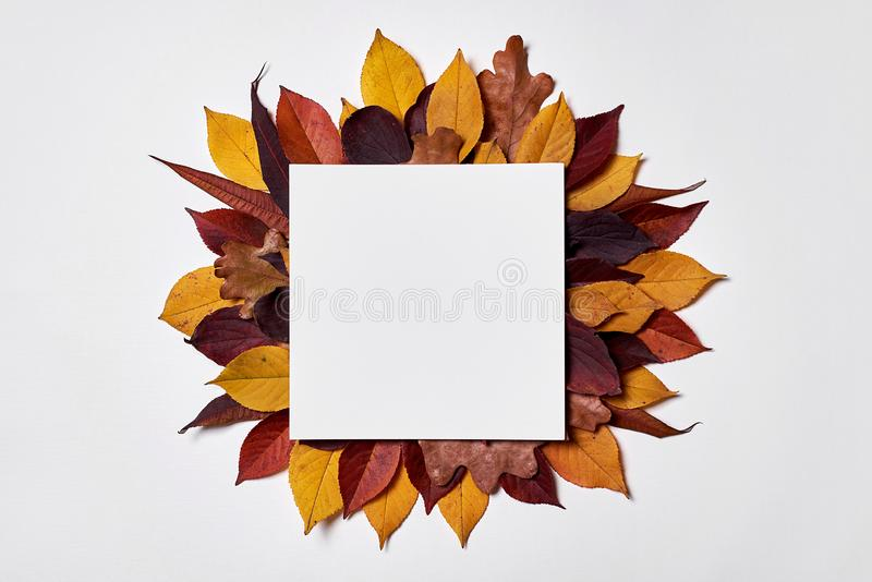 Autumn composition. Frame made of blank paper, yellow and red leaves on white background. Fall concept. Autumn thanksgiving royalty free stock image