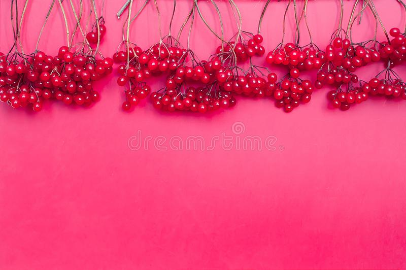 Autumn composition. Frame made of red viburnum berries on pink background. Flat lay, top view, copy space royalty free stock photo