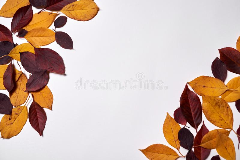 Autumn composition. Frame made of red and yellow leaves on white background. Fall concept. Autumn thanksgiving texture. Flat lay. Autumn composition. Frame made royalty free stock photography