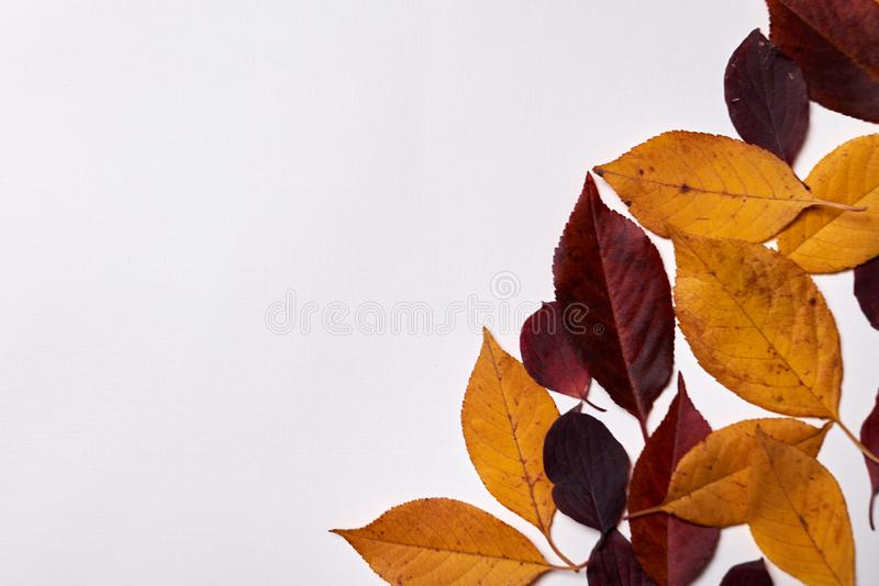 Autumn composition. Frame made of red and yellow leaves on white background. Fall concept. Autumn thanksgiving texture. Flat lay. Autumn composition. Frame made vector illustration