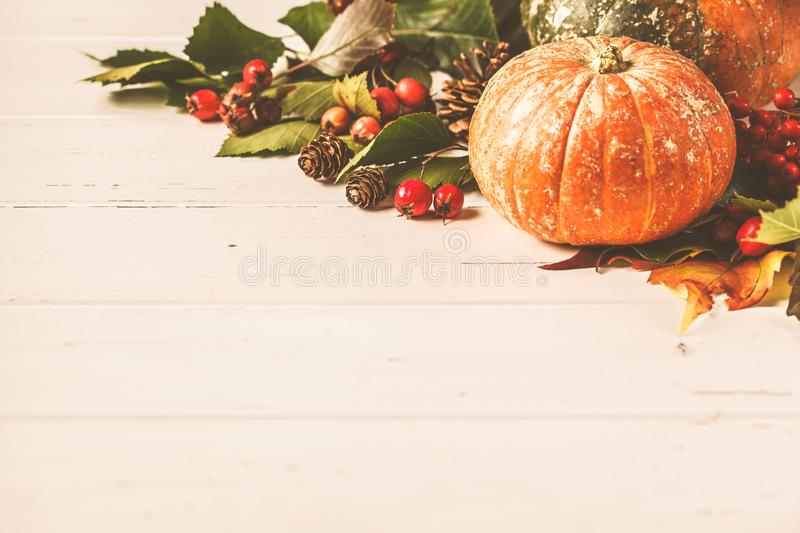 Autumn composition. Autumn leaves, berries and pumpkin on white background, copy space royalty free stock photo