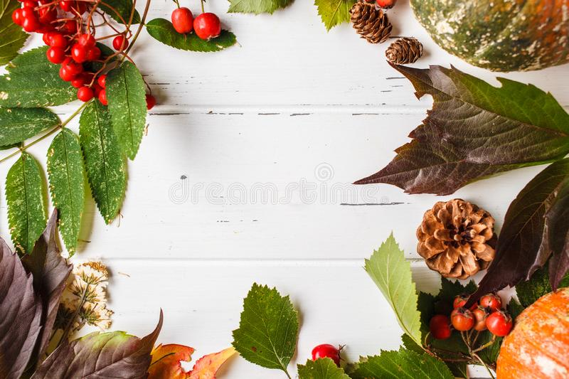 Autumn composition. Autumn leaves, berries and pumpkin on white background, copy space stock photo