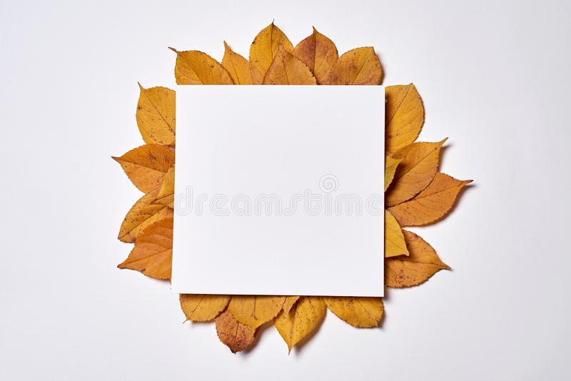 Autumn composition made of blank paper and yellow leaves on white background. Fall concept. Autumn thanksgiving texture. Flat lay. Autumn composition made of stock photos
