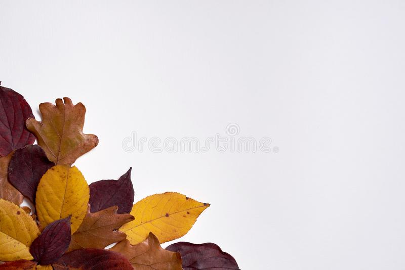 Autumn composition made of dried yellow and red leaves on white background. Fall concept. Autumn thanksgiving texture. Flat lay. Autumn composition made of stock photos