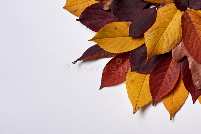Autumn composition made of dried yellow and red leaves on white background. Fall concept. Autumn thanksgiving texture. Flat lay. Autumn composition made of royalty free stock photo