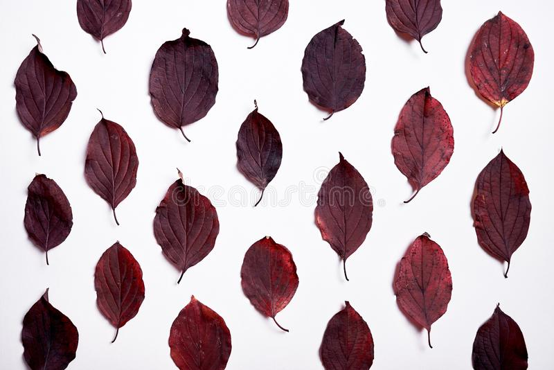 Autumn composition made of red leaves on white background. Fall concept. Autumn thanksgiving texture. Flat lay, top view. stock images