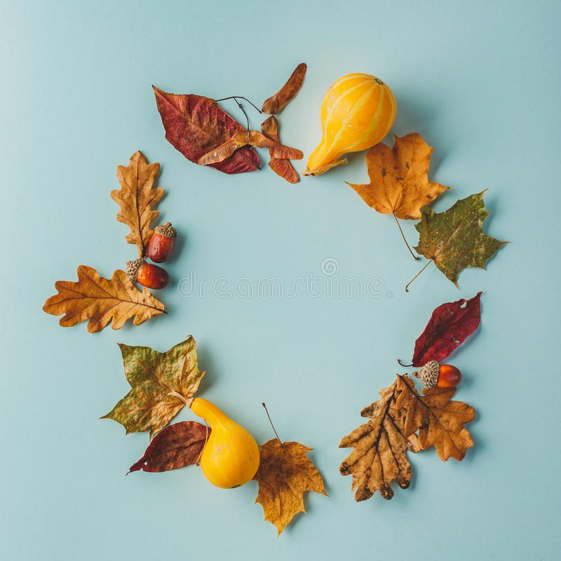 Autumn composition of maple leaves, oak, acorns and pumpkins on a blue background royalty free stock image