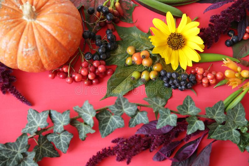 Autumn composition. Maple leaves, pumpkin, flowers and rowan, berries on red background. Autumn, fall, halloween, thanksgiving day concept. Flat lay, top view stock images