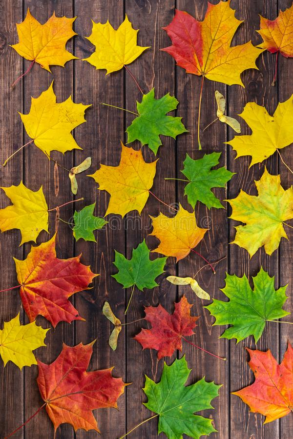 Autumn composition. Multi-colored maple leaves: red, green and yellow and seeds as pattern on dark wooden brown background. stock image