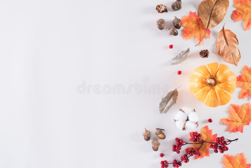 Autumn composition. Orange pumpkin with autumn leaves, red berries, acorn nuts and white cotton head on white background. Flat lay royalty free stock photography