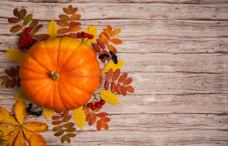 Pumpkin, colored leaves, hawthorn berries and Rowan on a wooden background. royalty free stock photo