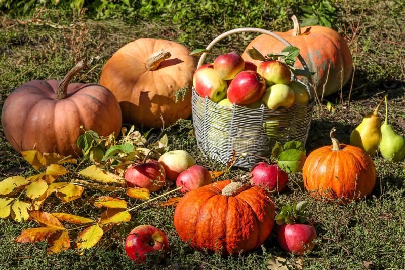Autumn composition with pumpkins and basket of apples are in the garden on the grass, horizontal orientation. Closeup royalty free stock images