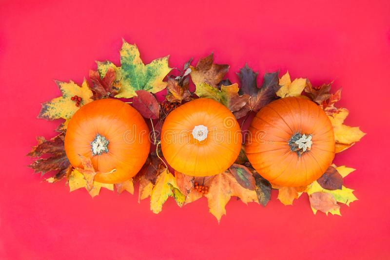 Autumn composition. Pumpkins, dried leaves on Crimson red background. Autumn harvest, thanksgiving, halloween concept. healthy die stock photo