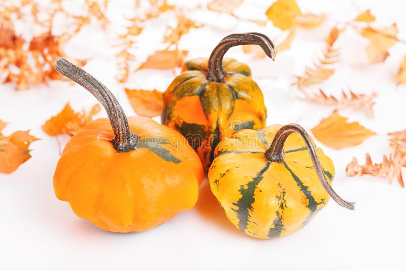 Autumn composition. Pumpkins, dried leaves on white background. Autumn, fall, halloween concept. Flat lay, top view, stock photos