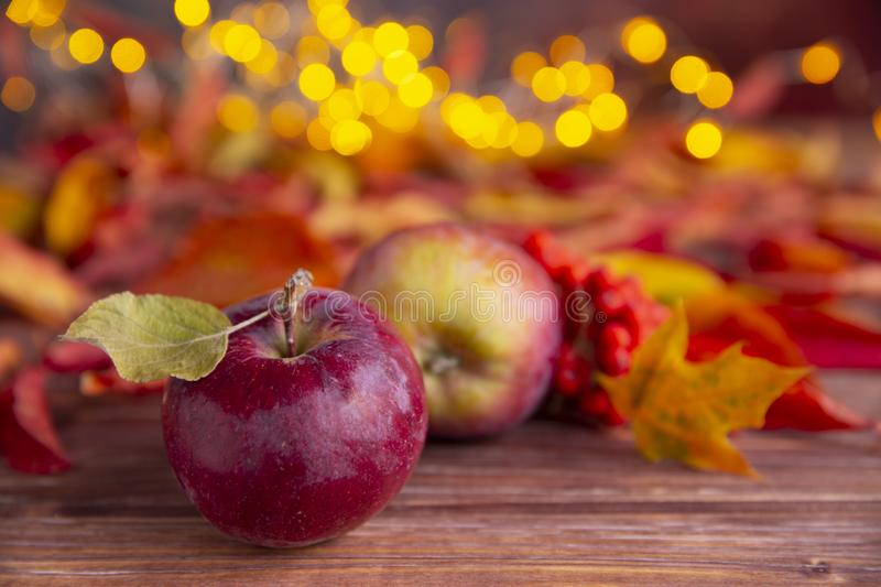 Autumn composition with red apples, ashberry and colorful leaves with yellow warm little lights on the background. Arrangement of royalty free stock image