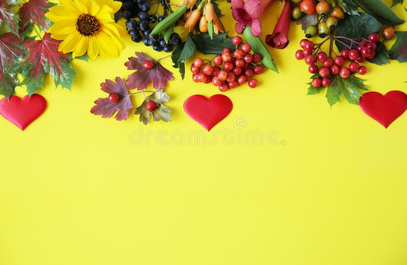 Autumn composition with red heart. Maple leaves, flowers and rowan berries on yellow background. royalty free stock photo