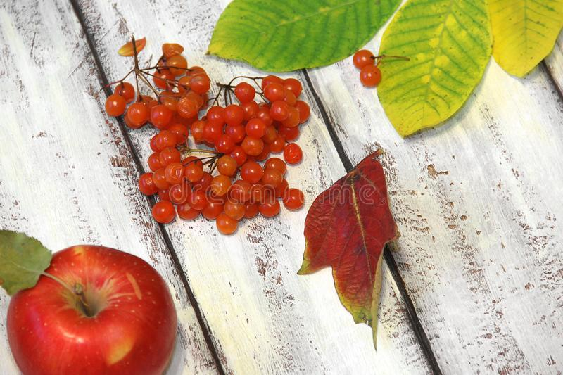 Autumn composition on a wooden background. Apples, viburnum and leaves stock photos