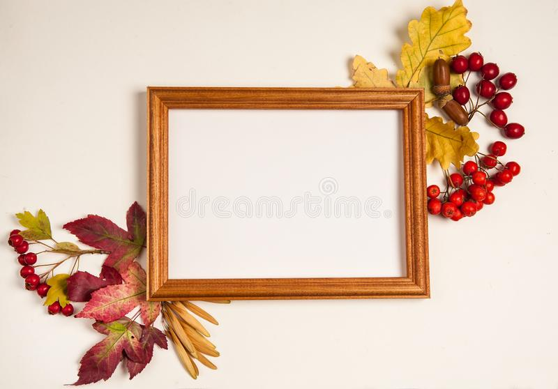 Wooden photo frame, yellow oak leaves, red maple leaves, Rowan fruits, hawthorn, acorns on white background. royalty free stock images
