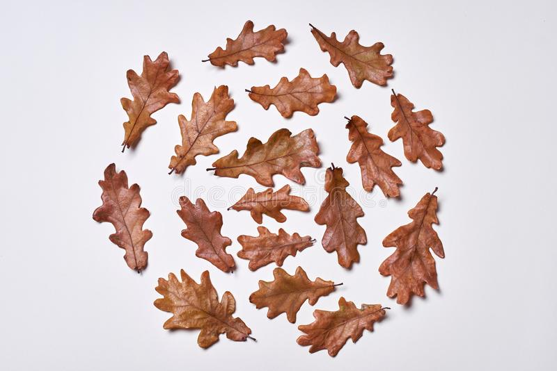 Autumn composition. Wreath made of autumn dried oak leaves on white background. Fall concept. Autumn thanksgiving texture. Lay, top view, copy space, leaf stock photography
