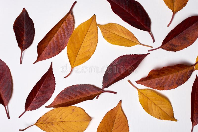 Autumn composition. Wreath made of autumn dried oak leaves on white background. Fall concept. Autumn thanksgiving texture. Lay, top view, copy space, leaf royalty free stock photography