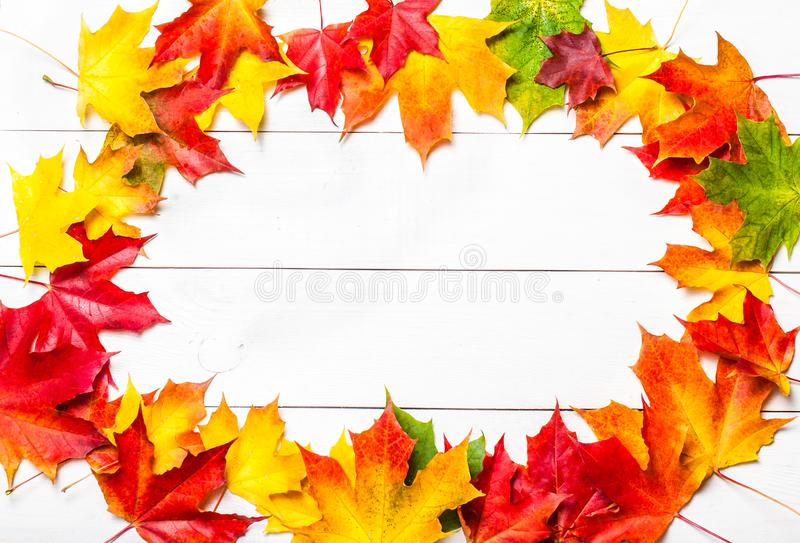 Autumn composition wuth colorful marple leaves on white wood background. Beautiful frame with red, yellow and brown autumn leaves stock photo