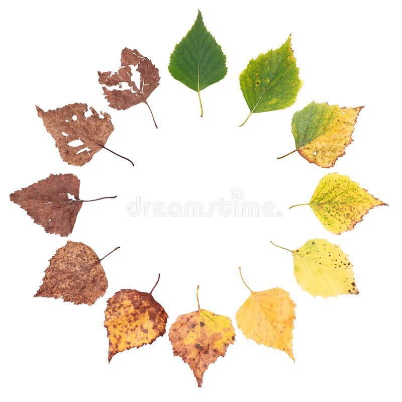 Autumn concept, age changes of leaves, aging stages, the birth death, drying. Time flies royalty free stock photo
