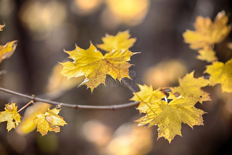 Autumn concept with yellow leaves, blurred background stock photos