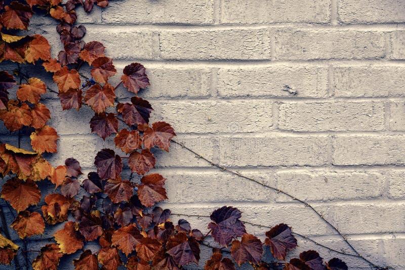 Autumn Corner Border- - Brown-Weinrebe-Blätter stockfotos