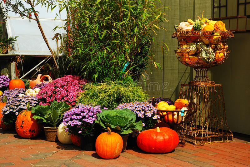 Autumn in the country. Pumpkins and mums are on display at a New England nursey royalty free stock image