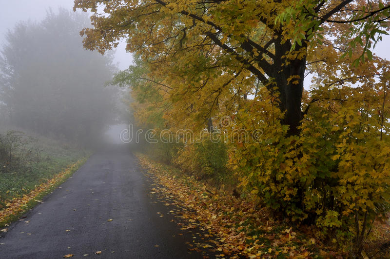 Autumn Country Road photos stock