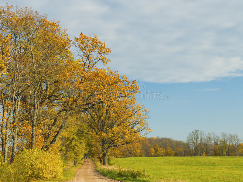 Autumn country road, Latvia. Country road among trees and fields, Latvia stock photos
