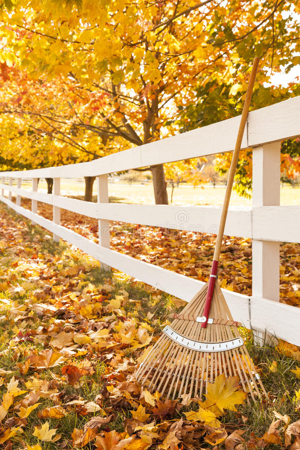 Autumn in the countryside with rake leaning up against white picket fence under maple trees with fallen leaves stock image