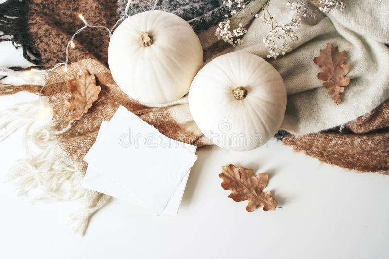 Autumn cozy composition. Blank card mockup scene. White pumpkins, dry oak leaves, Christmas lights and wool plaid on stock image