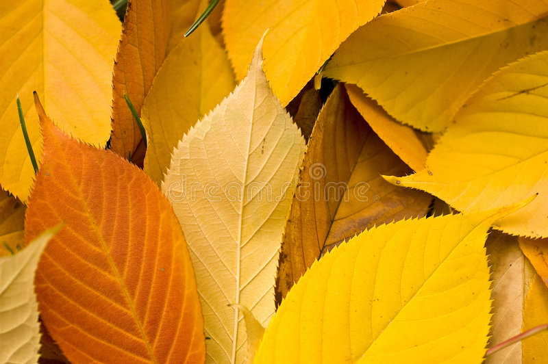 Autumn in crayon stock images