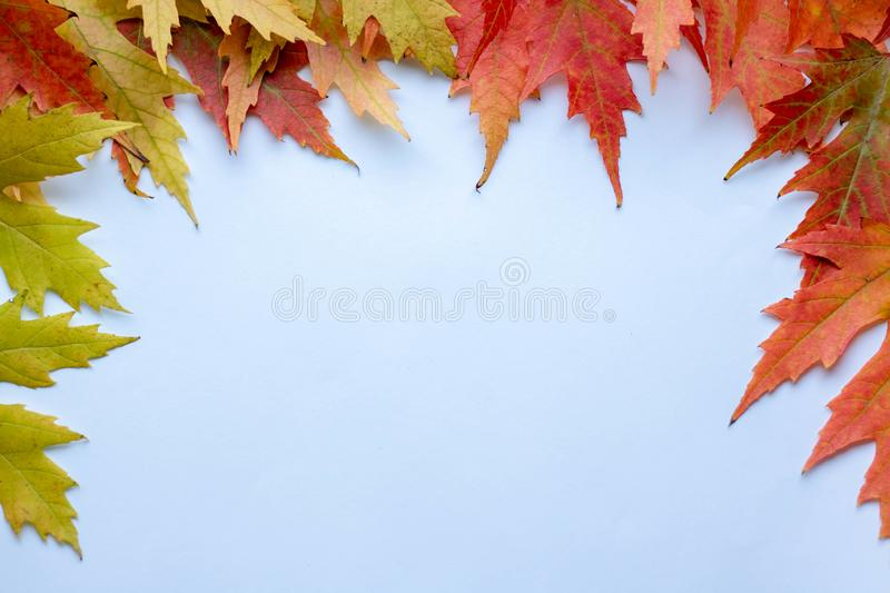 Autumn creative composition. Dried leaves on white background. Fall concept. Autumn background. Flat lay, top view, copy space royalty free stock images