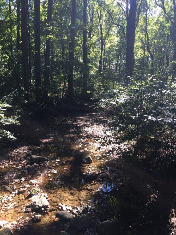Autumn Creek royalty-vrije stock afbeelding