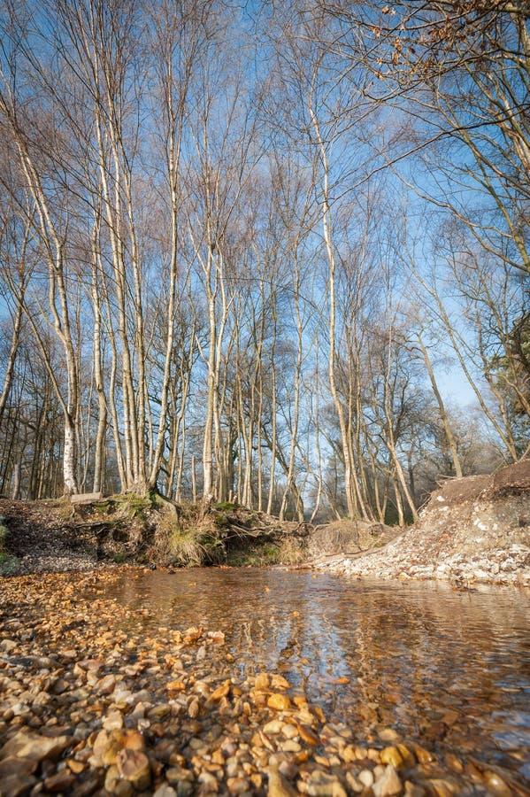 Download Autumn creek stock image. Image of highland, tree, nature - 28155707
