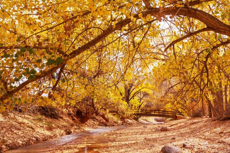 Autumn Creek imagem de stock