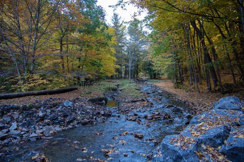 Autumn Creek in het Park van de WetsteenGolfstaat stock fotografie