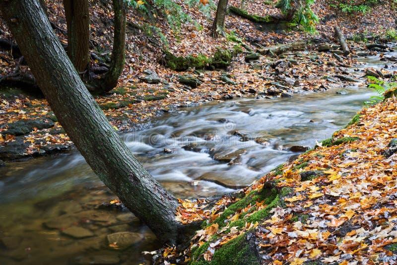 Autumn Creek met Kleurrijke Bladeren royalty-vrije stock foto