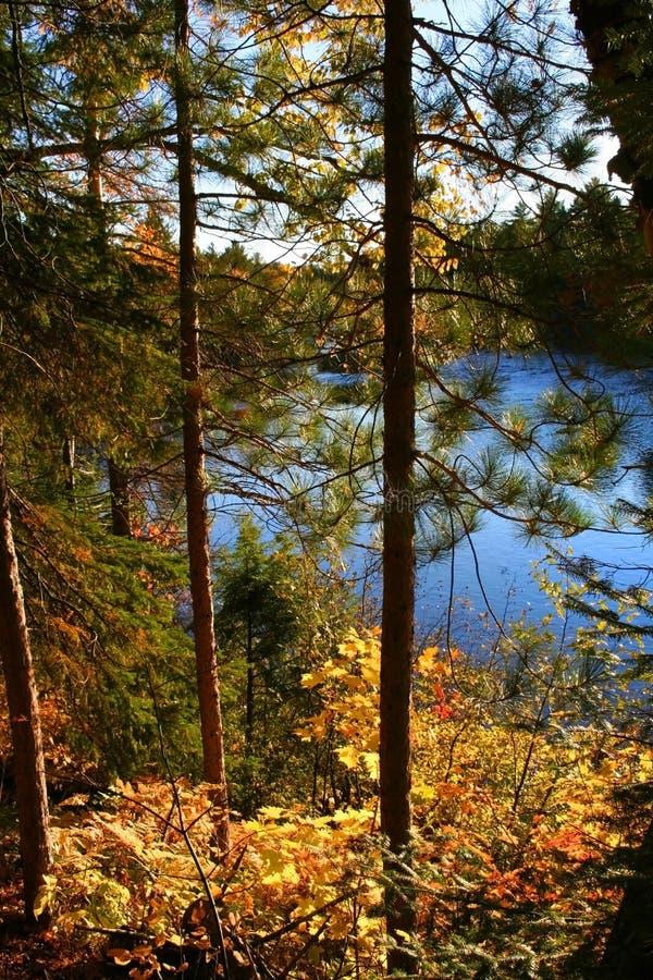 autumn czasu drzewa zdjęcia royalty free