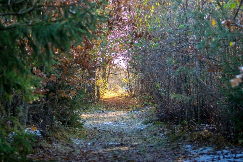 Autumn Danish Forest fotografie stock