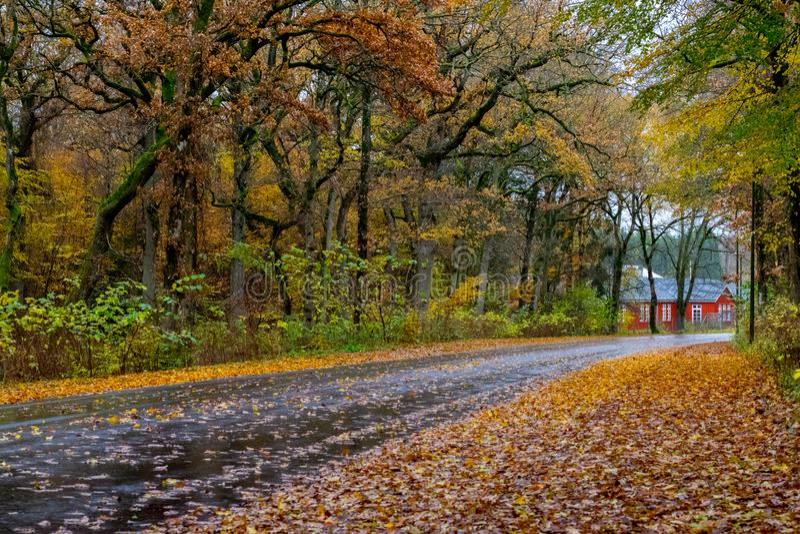 Autumn Danish Forest en noviembre en Viborg, Dinamarca imagen de archivo libre de regalías