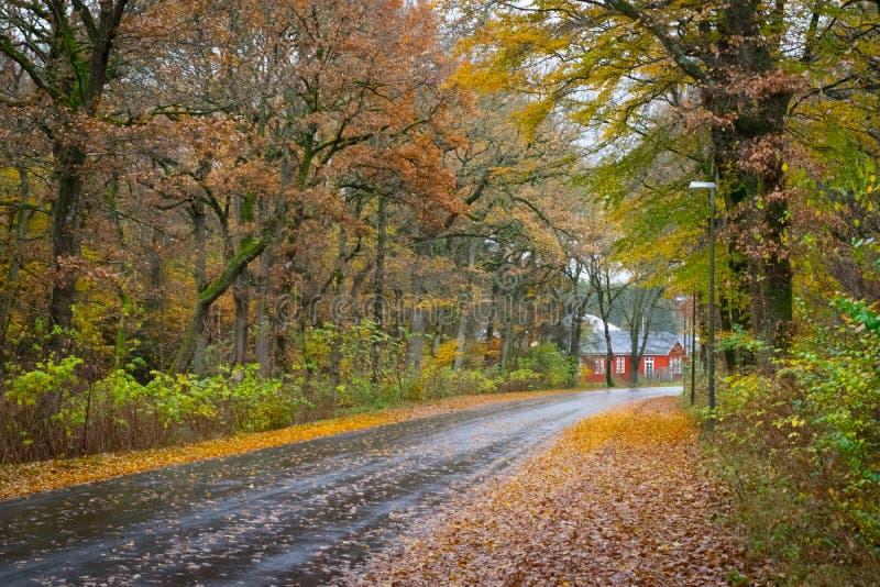 Autumn Danish Forest i November i Viborg, Danmark arkivbilder
