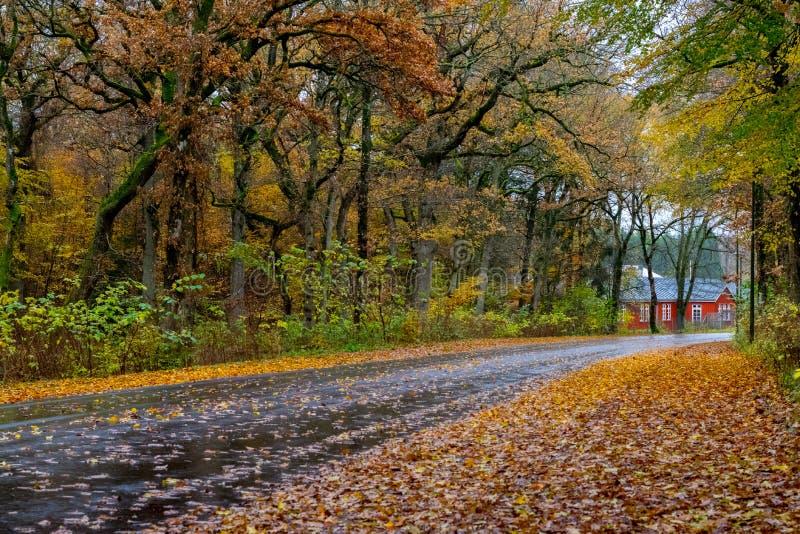 Autumn Danish Forest i November i Viborg, Danmark royaltyfri bild