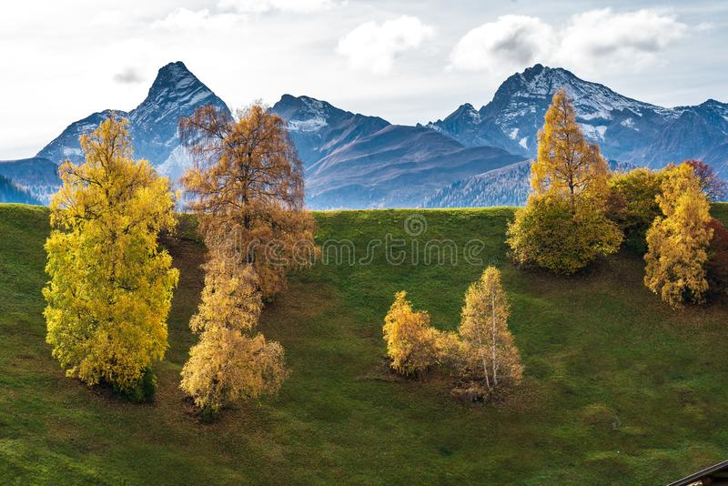 Autumn in Davos Grisons Switzerland, yellow coloured trees stock image