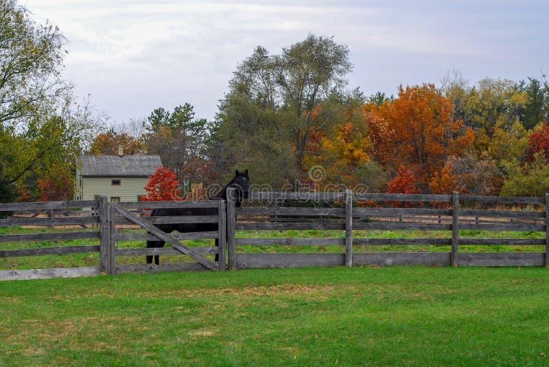 Autumn Day al vecchio mondo Wisconsin con un cavallo nero fotografia stock