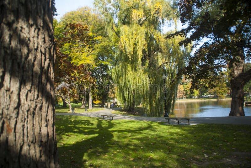 Autumn day Boston Common stock photography